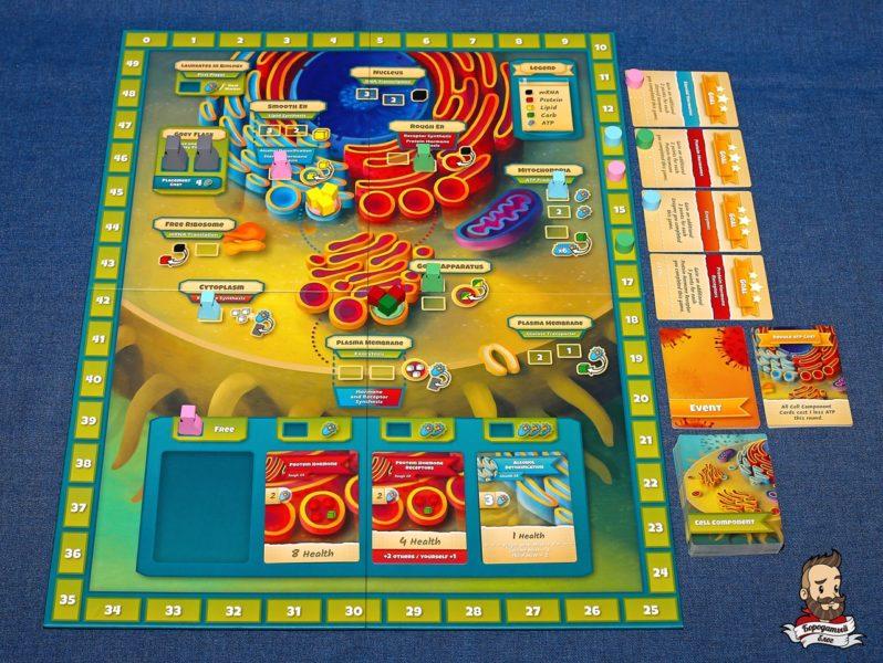 Игровой процесс